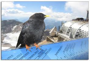 Foto: Deutschland Zugspitze Reisebegleiter